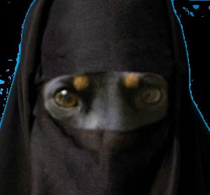 Hiwanmalabis invente la burqa pour animaux