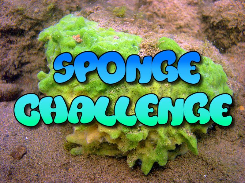 """Le """"Sponge Challenge"""" après le """"Blue Whale Challenge"""" : un nouveau défi stupide viral sur Internet"""